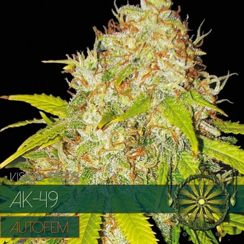 AK-49 AUTOFLOWER CANNABIS STRAIN BY VISION SEEDS