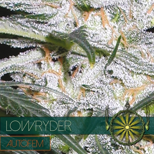 Lowryder – AutoFem - Vision Seeds