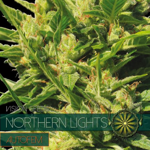 NORTHERN LIGHTS AUTOFLOWER CANNABIS STRAIN BY VISION SEEDS