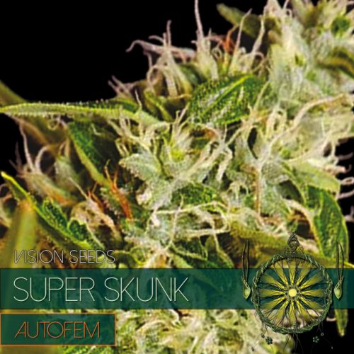 SUPER SKUNK AUTOFLOWER CANNABIS STRAIN BY VISION SEEDS