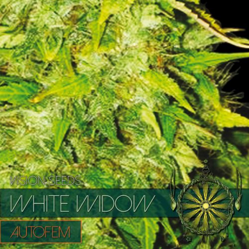 WHITE WIDOW AUTOFLOWER CANNABIS STRAIN BY VISION SEEDS