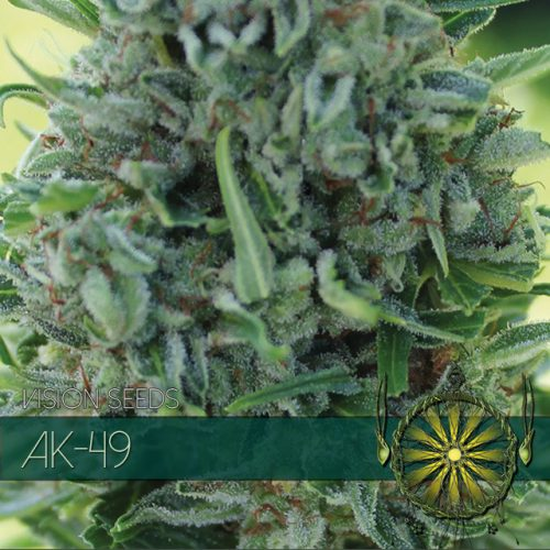 AK-49 FEMINIZED CANNABIS STRAIN BY VISION SEEDS