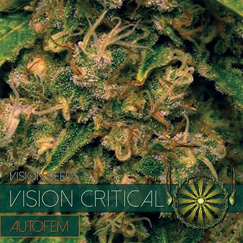 Vision Critical - AutoFem - Vision Seeds