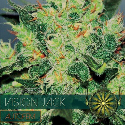 Vision Jack - AutoFem - Vision Seeds