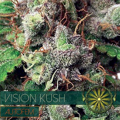 Vision Kush - AutoFem - Vision Seeds