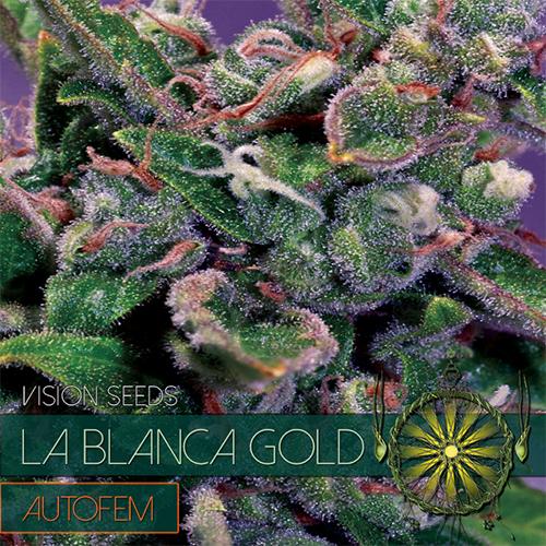 La Blanca Gold AutoFem - Vision Seeds