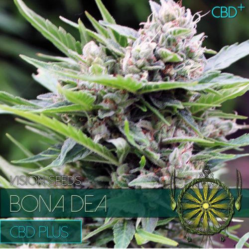 BONA DEA CBD PLUS CANNABIS STRAIN BY VISION SEEDS