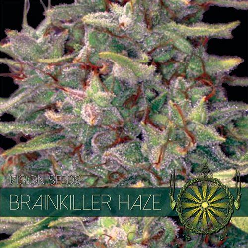 Brainkiller Haze - Vision Seeds