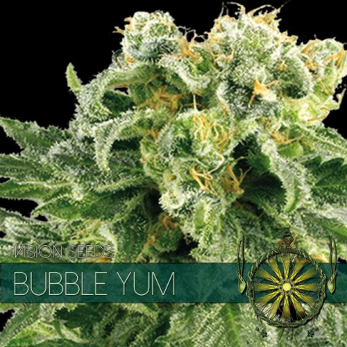 BUBBLE YUM FEMINIZED CANNABIS STRAIN BY VISION SEEDS