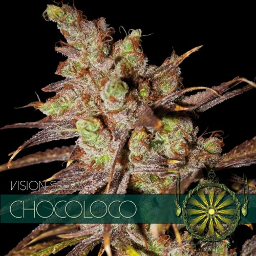 CHOCOLOCO FEMINIZED CANNABIS STRAIN BY VISION SEEDS