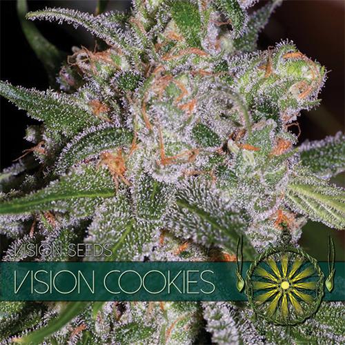 Vision Cookies - Vision Seeds