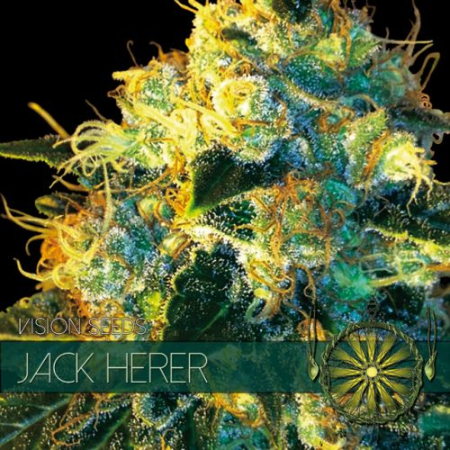 JACK HERER FEMINIZED CANNABIS STRAIN BY VISION SEEDS