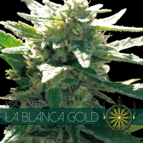 LA BLANCA GOLD FEMINIZED CANNABIS STRAIN BY VISION SEEDS