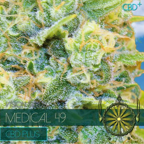MEDICAL 49 CBD PLUS CANNABIS STRAIN BY VISION SEEDS