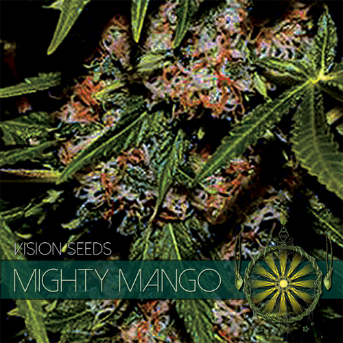 Mighty Mango Bud - Vision Seeds