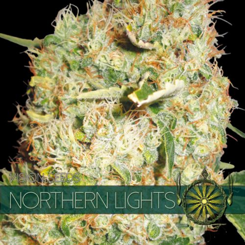 NORTHERN LIGHTS FEMINIZED CANNABIS STRAIN BY VISION SEEDS