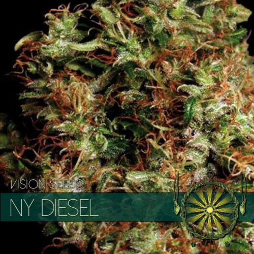NY DIESEL FEMINIZED CANNABIS STRAIN BY VISION SEEDS