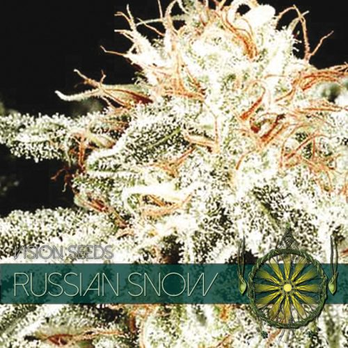 RUSSIAN SNOW FEMINIZED CANNABIS STRAIN BY VISION SEEDS