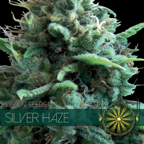 SILVER HAZE FEMINIZED CANNABIS STRAIN BY VISION SEEDS