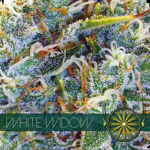 WHITE WIDOW FEMINIZED STRAIN BY VISION SEEDS